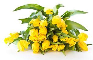 Бесплатные фото тюльпаны, лепестки, желтые, стебли, листья, зеленые, цветы