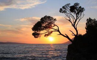 Фото бесплатно закат, море, дерево