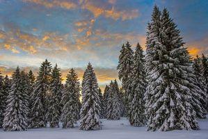 Бесплатные фото зима,снег,деревья,сугробы,закат,пейзаж