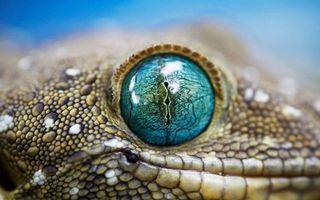 Photo free snake, eye, pupil