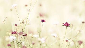 Фото бесплатно цветы, фиолетовый, белый