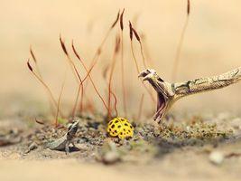 Photo free snake, lizard, butterfly