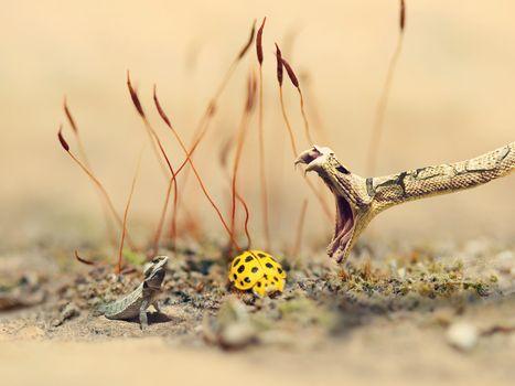 Фото бесплатно змея, ящерица, бабочка