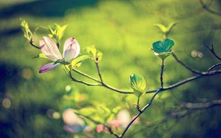 Фото бесплатно дерево, ветка, цветок