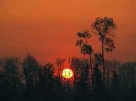 Бесплатные фото деревья,солнце,закат,рассвет,небо,парк,лето