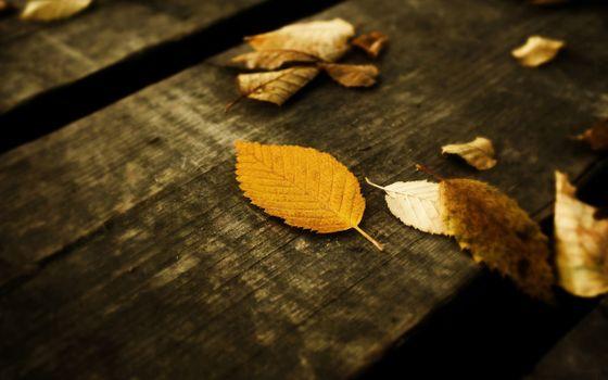 Фото бесплатно доски, листья, осень