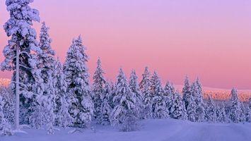 Бесплатные фото ели,небо,зима,снег,сугробы,холод,природа