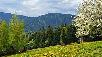 Фото бесплатно горы, деревья, поляна, трава, небо, природа