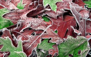 Фото бесплатно иней, листья, ветки