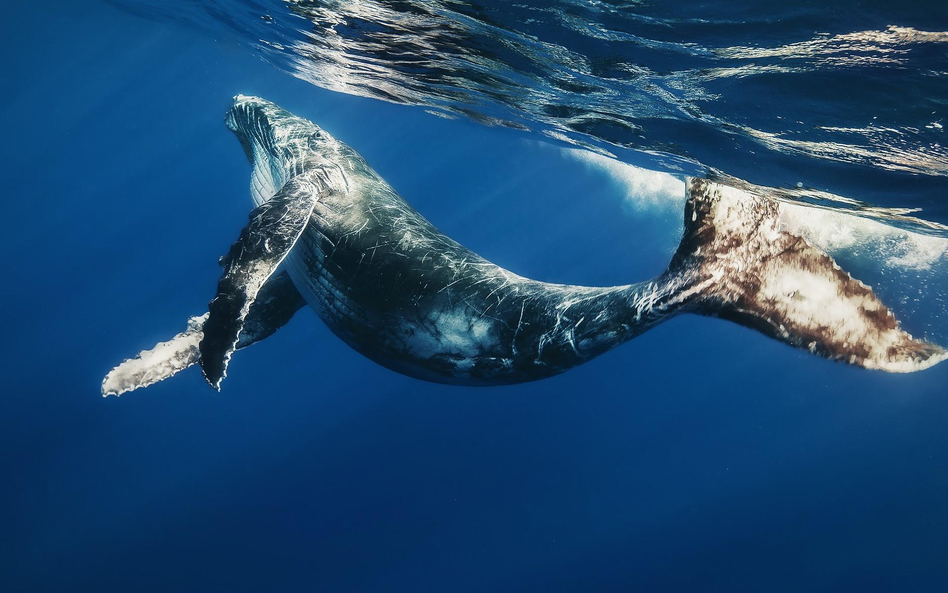 кит, океан, вода