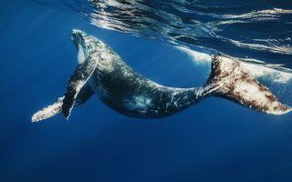 Фото бесплатно кит, океан, вода