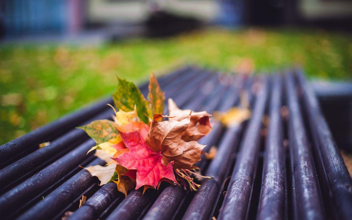 Фото бесплатно листья, кленовые, клен, букет, лавка, скамейка, осень, дерево, природа, природа