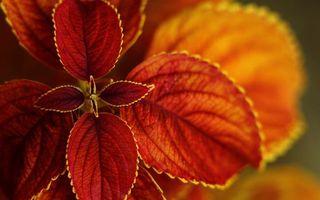 Бесплатные фото листья,цветок,красный,желтый,оранжевый,лепестки,растение