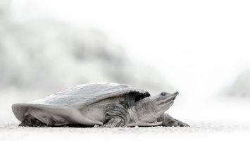 Бесплатные фото морская,черепаха,панцирь,голова,нос,песок,амфибии