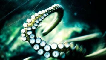 Фото бесплатно осьминог, спрут, щупальца, присоски, моллюск, подводный мир