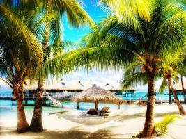 Фото бесплатно пальмы, вода, пляж