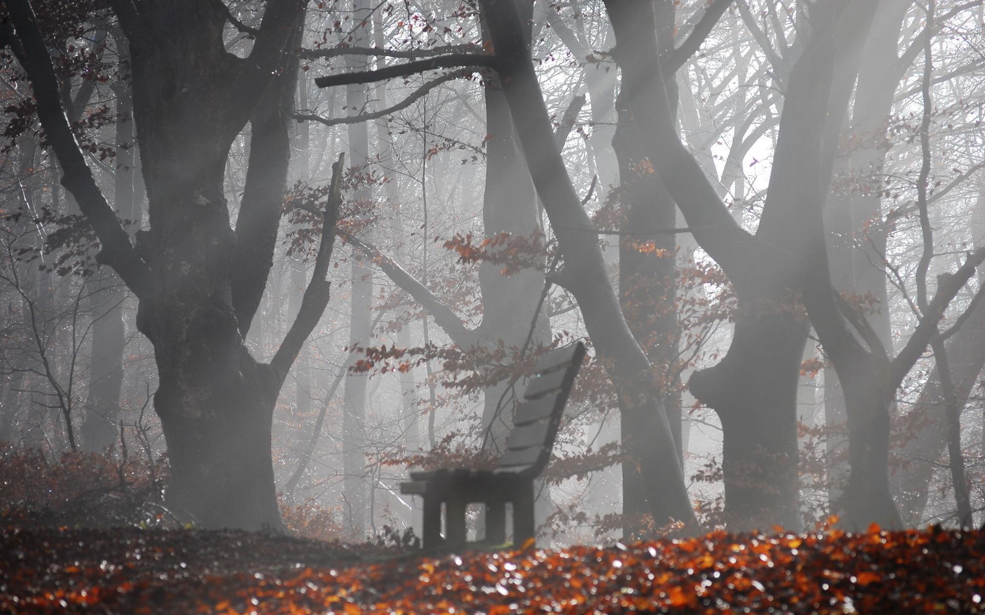 Скамейка парк осень 8