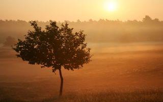 Фото бесплатно поле, деревья, восход