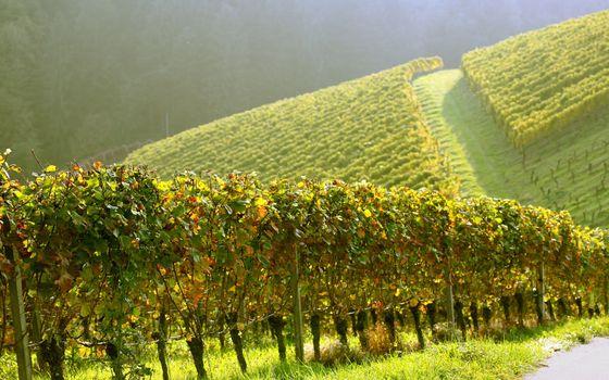 Заставки поле, плантация, чай