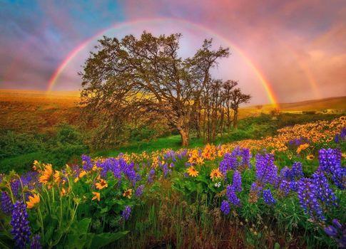 Фото бесплатно поле, цветы, радуга