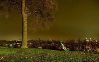 Фото бесплатно полет, дерево, листья