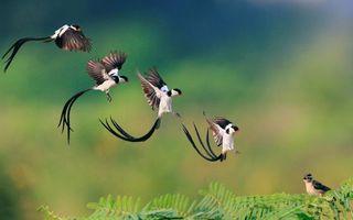 Бесплатные фото птицы,хвост,длинный,клюв,красный,перья,крылья