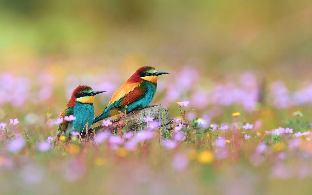 Фото бесплатно птицы, природа, поле, трава, зелень, разное