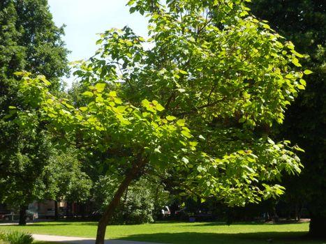 Фото бесплатно растение, природа, яркий день