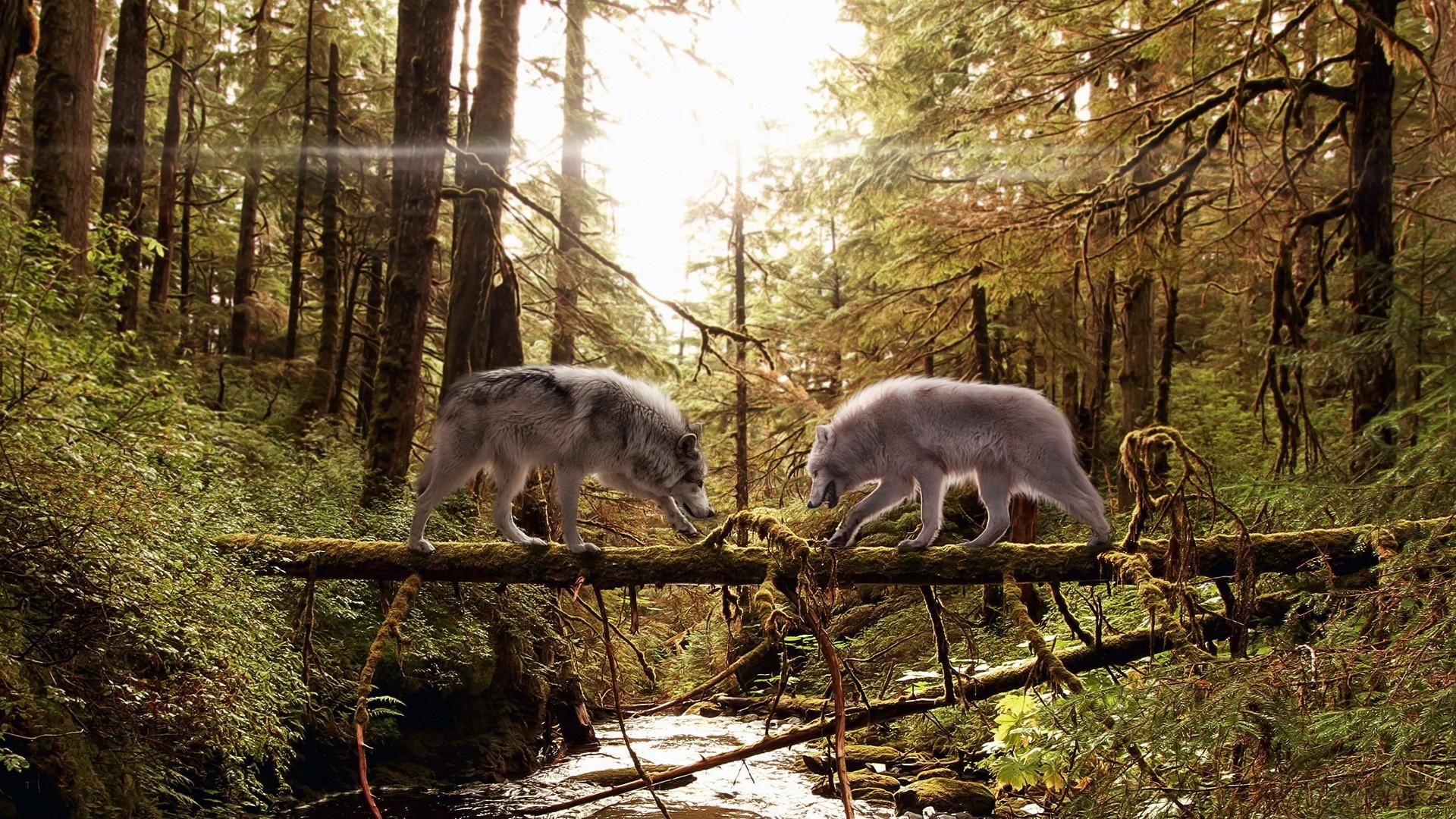 река, бревно, волки