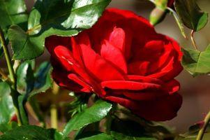 Фото бесплатно природа, лепестки, красные