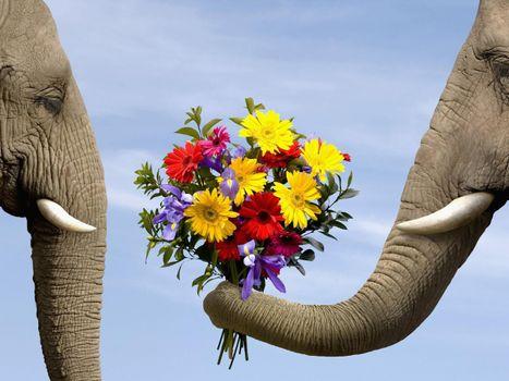 Фото бесплатно слон, цветы, букет, герберы, трава, хобот, клыки, глаза, серый, голубой, ирис, животные