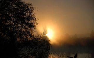 Фото бесплатно солнце, деревья, вода