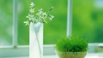 Заставки трава,листья,миска,цветок,ваза,растение,лепестки