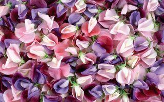 Заставки цветки,лепестки,бутоны,нежные,листья,букет,клумба