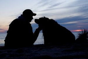 Обои вечер, на берегу, друзья, мужчина, собака, контур, закат, настроения