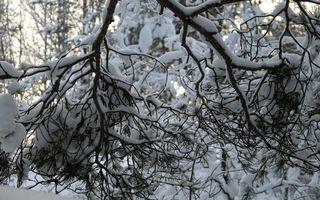 Бесплатные фото ветка,дерево,снег,мороз,зима,январь,февраль