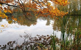 Photo free leaves, water, autumn
