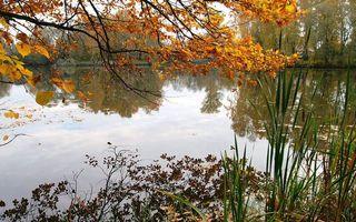 Фото бесплатно листья, вода, осень
