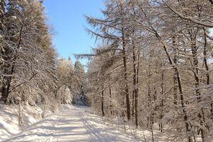 Бесплатные фото зима,лес,деревья,дорога,сугробы,пейзаж