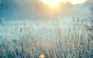 Заставки солнце, трава, поле