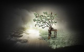 Бесплатные фото дерево,яблоки,белка,яблоко,яблоня,стол,белки