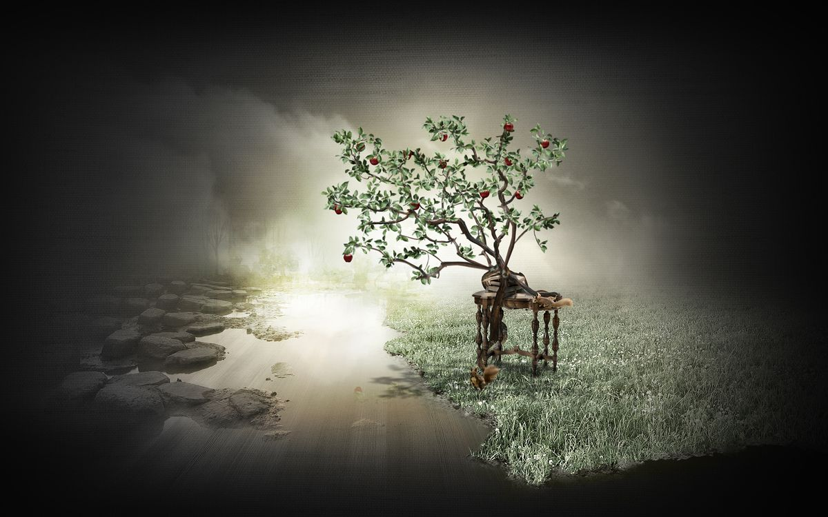 Фото бесплатно дерево, яблоки, белка, яблоко, яблоня, стол, белки, разное