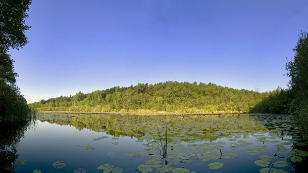 Фото бесплатно озеро, камыши, залив
