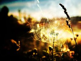 Фото бесплатно паутина, трава, закат