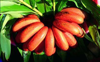Заставки бананы,листья,зеленые,свет,красиво,вкусно,еда