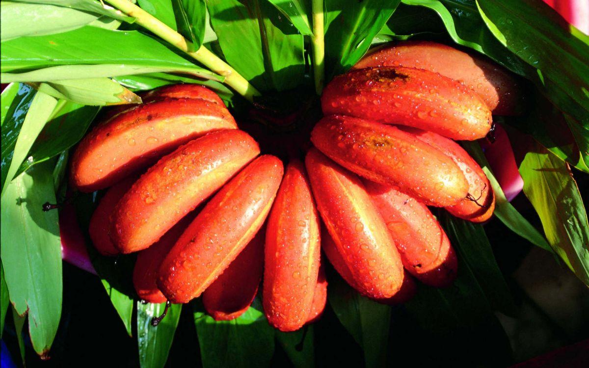Фото бесплатно бананы, листья, зеленые, свет, красиво, вкусно, еда, еда