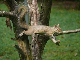 Бесплатные фото белка,хвост,глаза,дерево,ветки,животные