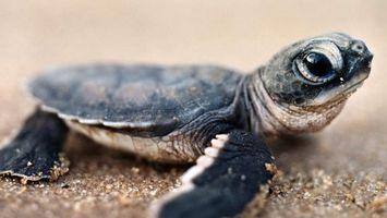 Фото бесплатно черепаха, маленькая, глаза