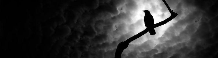 Бесплатные фото черный,ворон,ветка,ночь,луна,облака,небо
