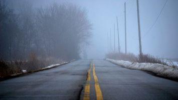 Фото бесплатно деревья, туман, поляки